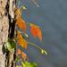 Climbing Color