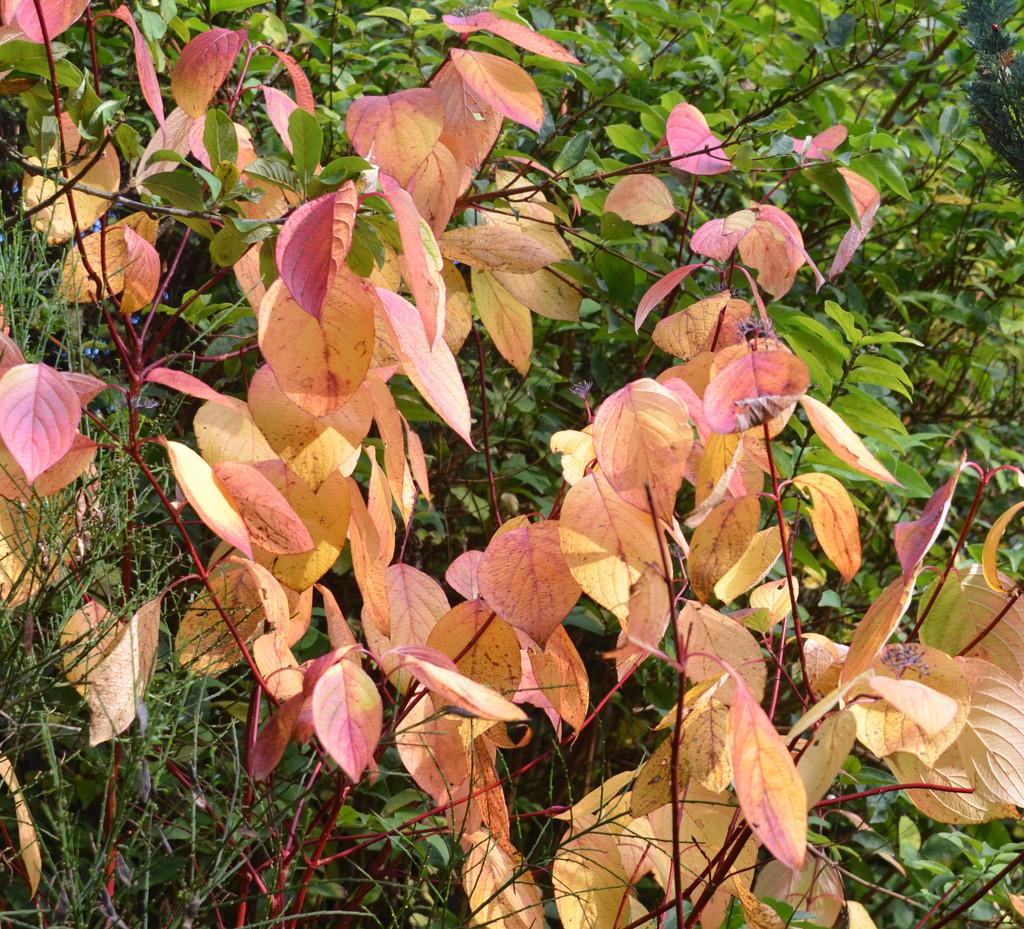 Autumn Leaves by arkensiel