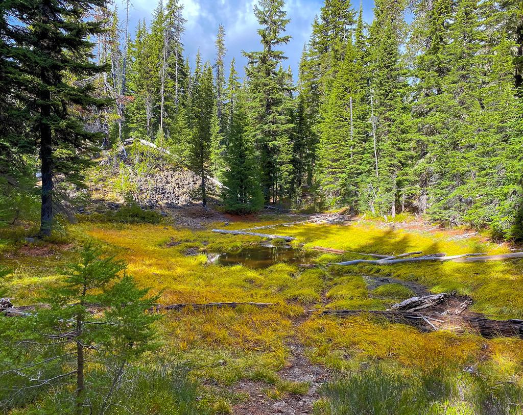 Mountain Marsh In Fall  by jgpittenger