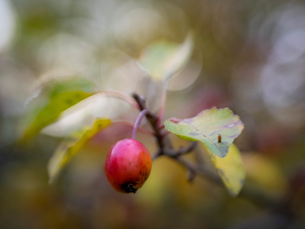 Autumn impression by haskar