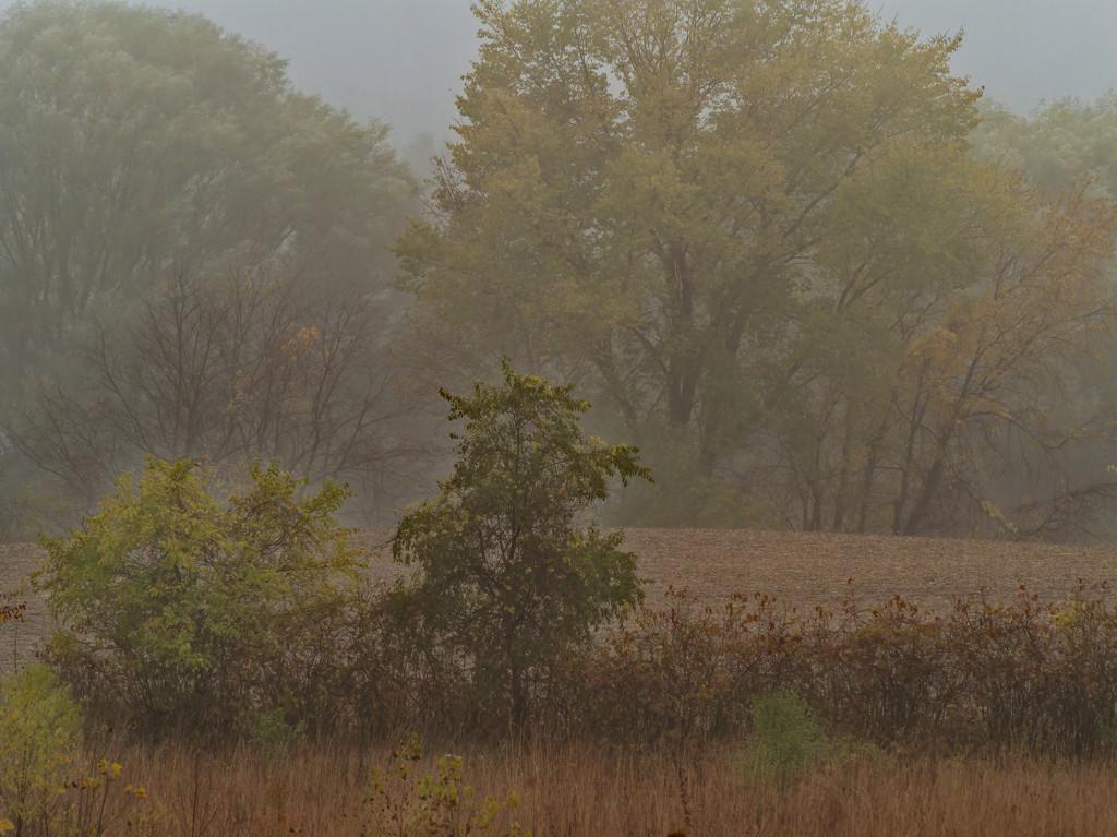 prairie landscape  by rminer