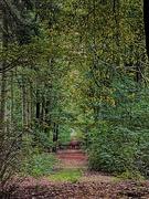 22nd Oct 2020 - Woods