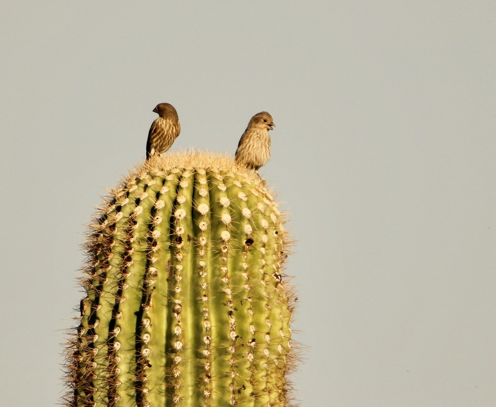 On top of a Spiky World by corinnec
