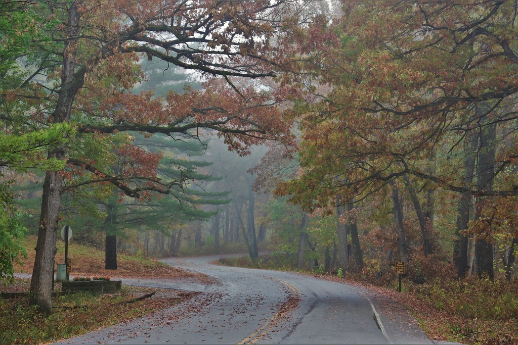 Misty, Rainy Day Drive by lynnz