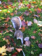 22nd Oct 2020 - Got any nuts?