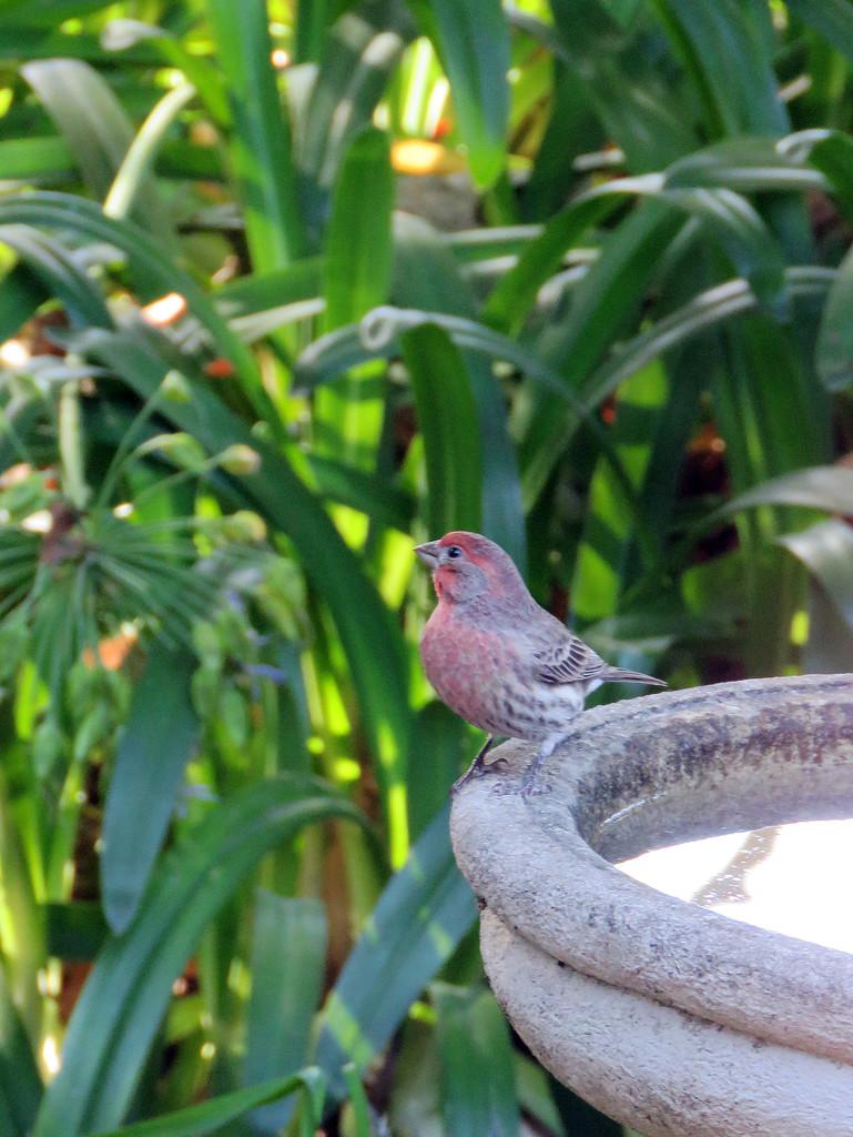Backyard visitor by shookchung