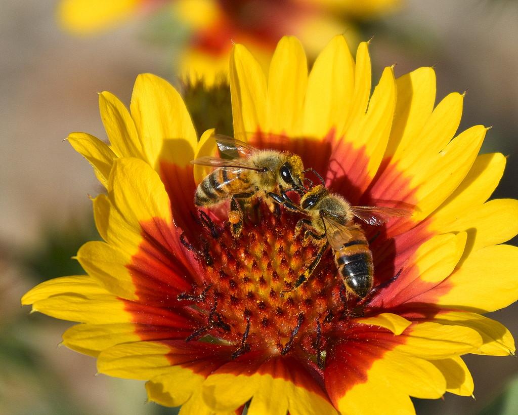The Pollinators by genealogygenie