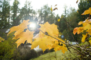 22nd Oct 2020 - Leaf, Air and Sun