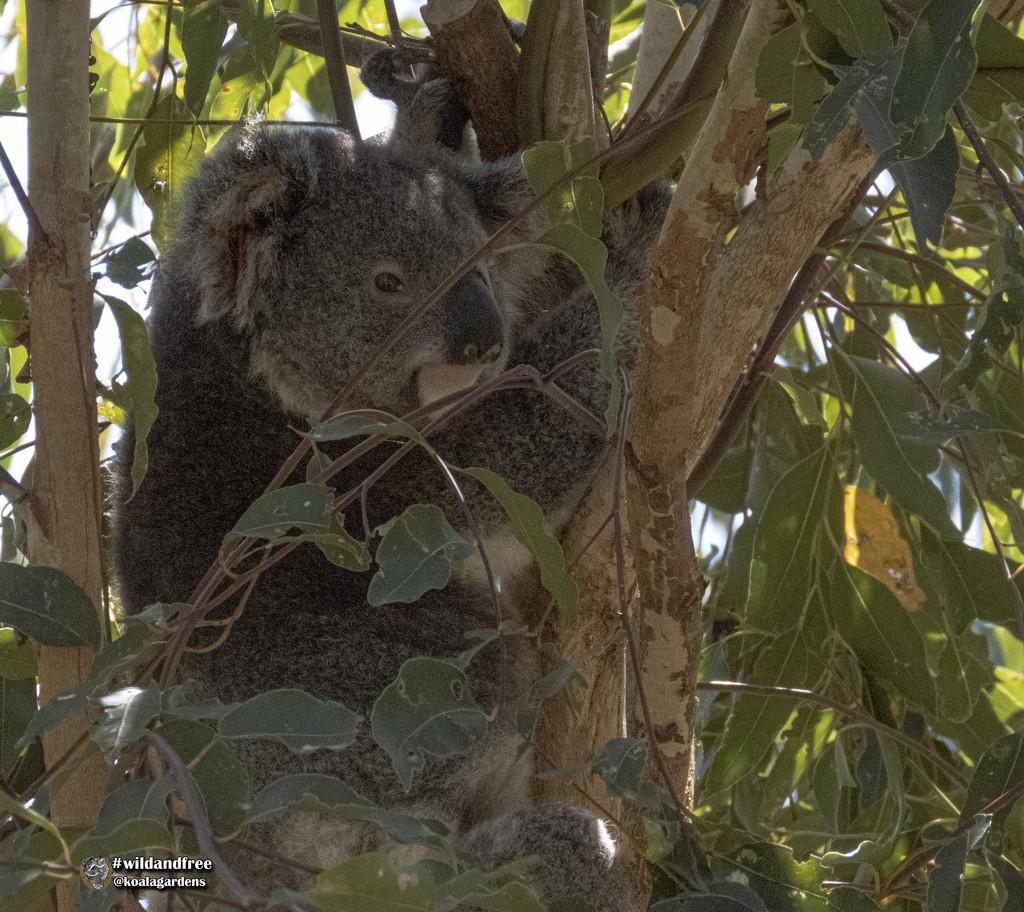 bye bye Dimples by koalagardens