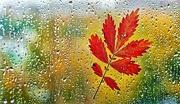 23rd Oct 2020 - Rain