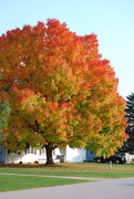 23rd Oct 2020 - Fall Colors have peaked