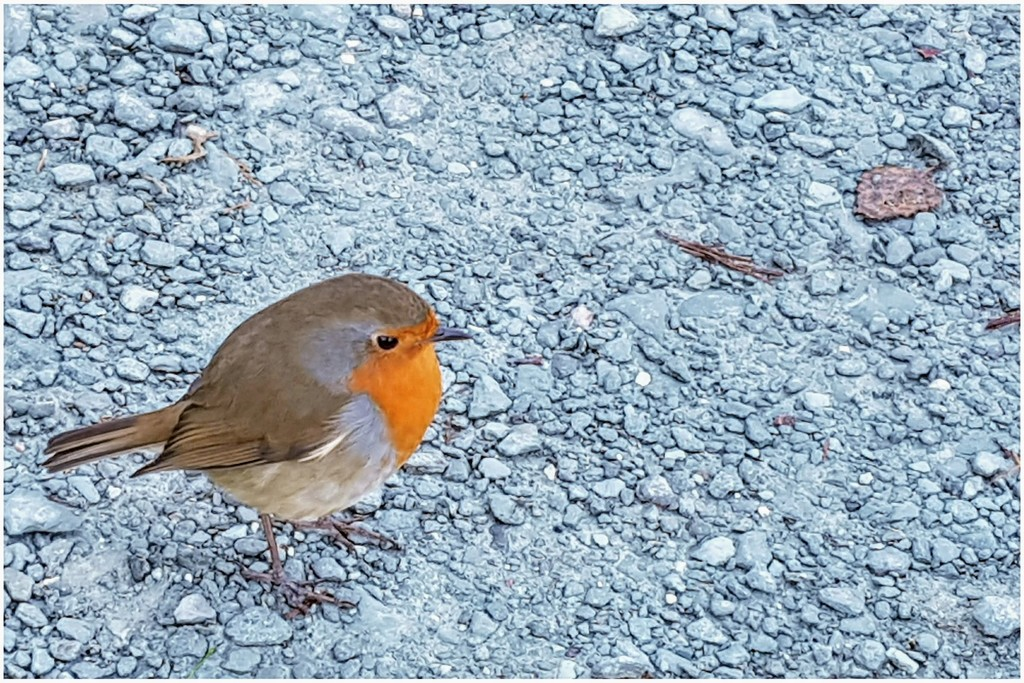 This cheeky robin was so tame it hopped right up to me, hoping for food probably! by lyndamcg