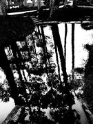 23rd Oct 2020 - Trees of Keurboom #8