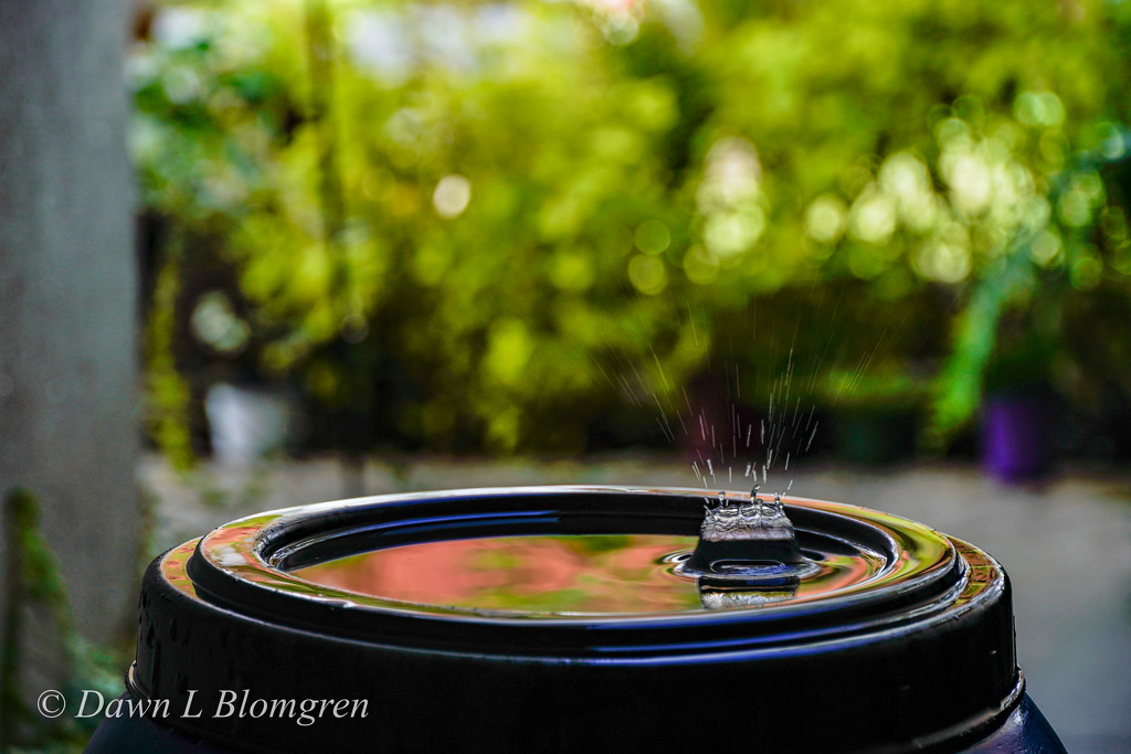 Reflections and Raindrops by dawnblom