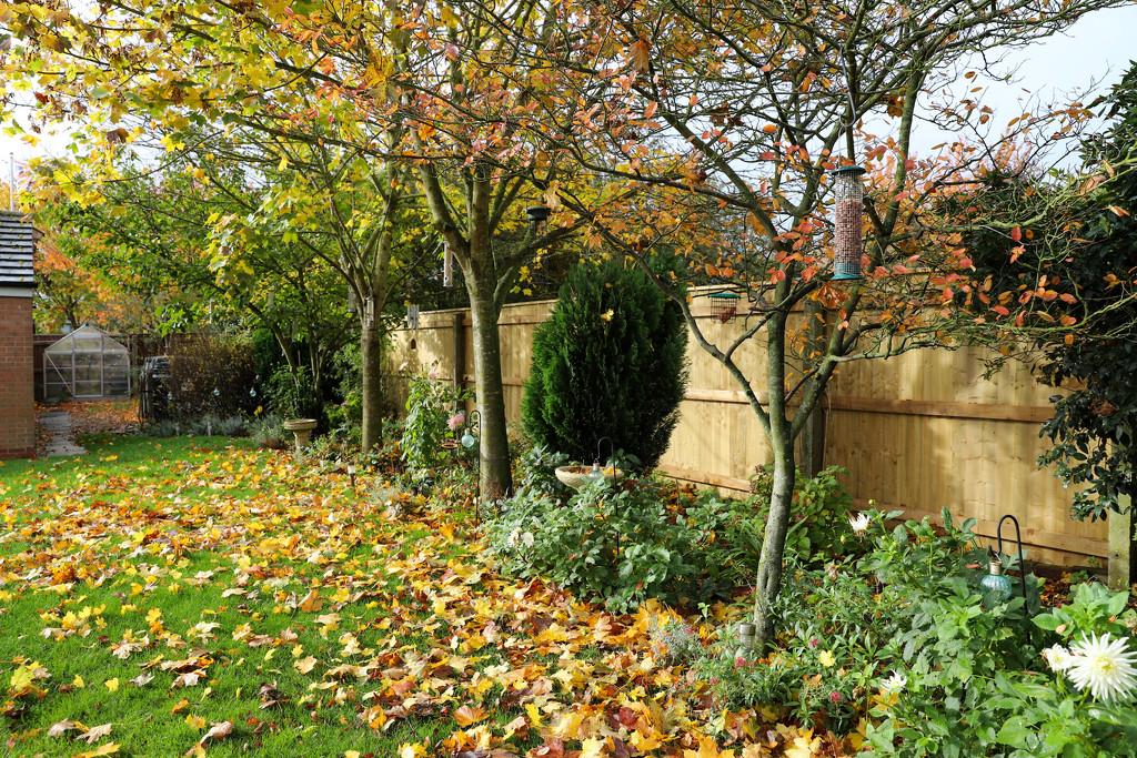 My Garden October  by phil_sandford