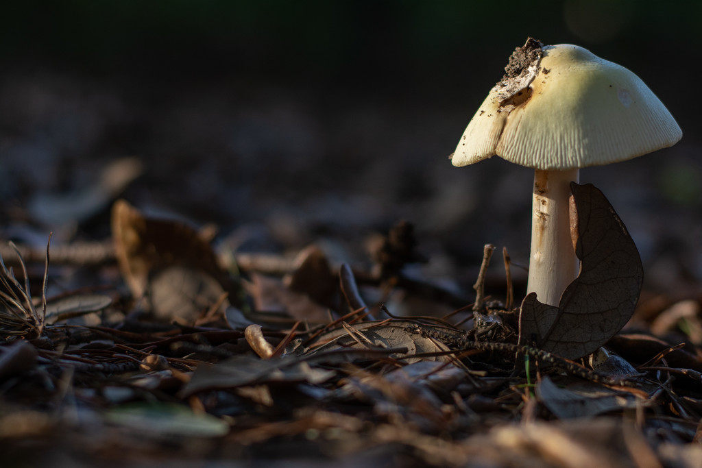 Another fungi... by thewatersphotos