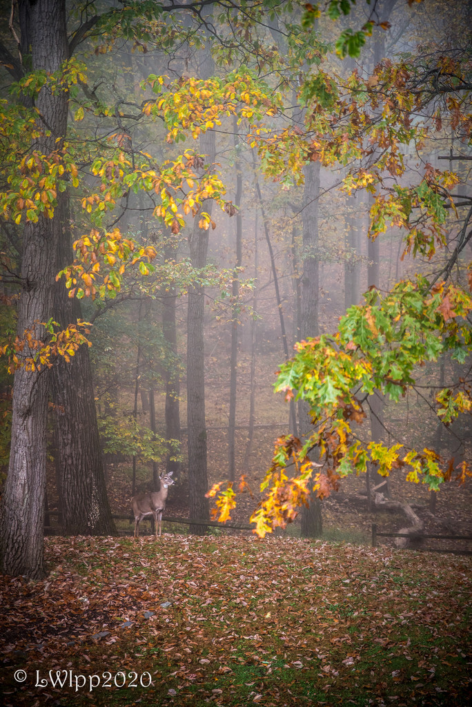 Foggy Morning  by lesip