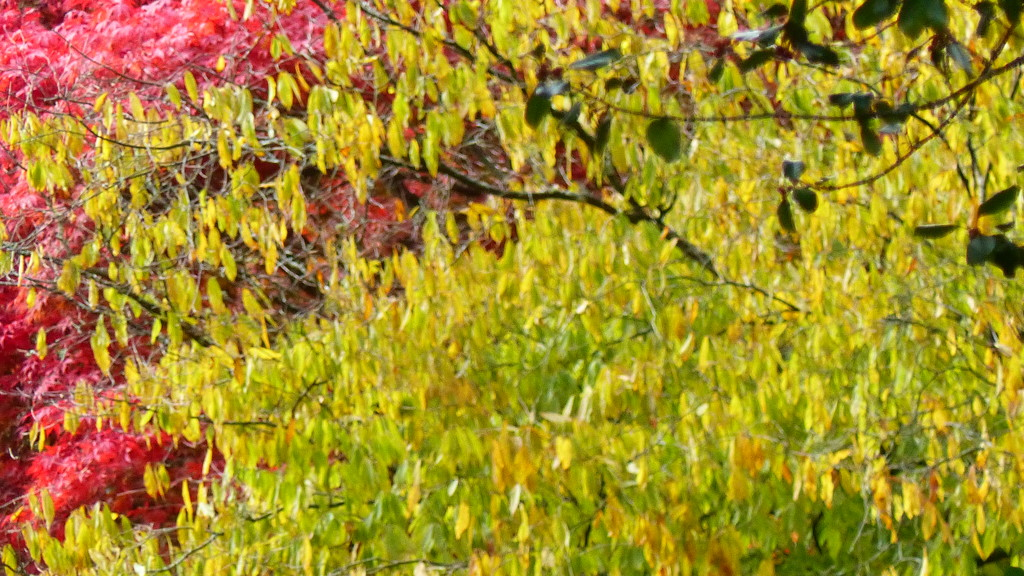 autumn colours by peterday