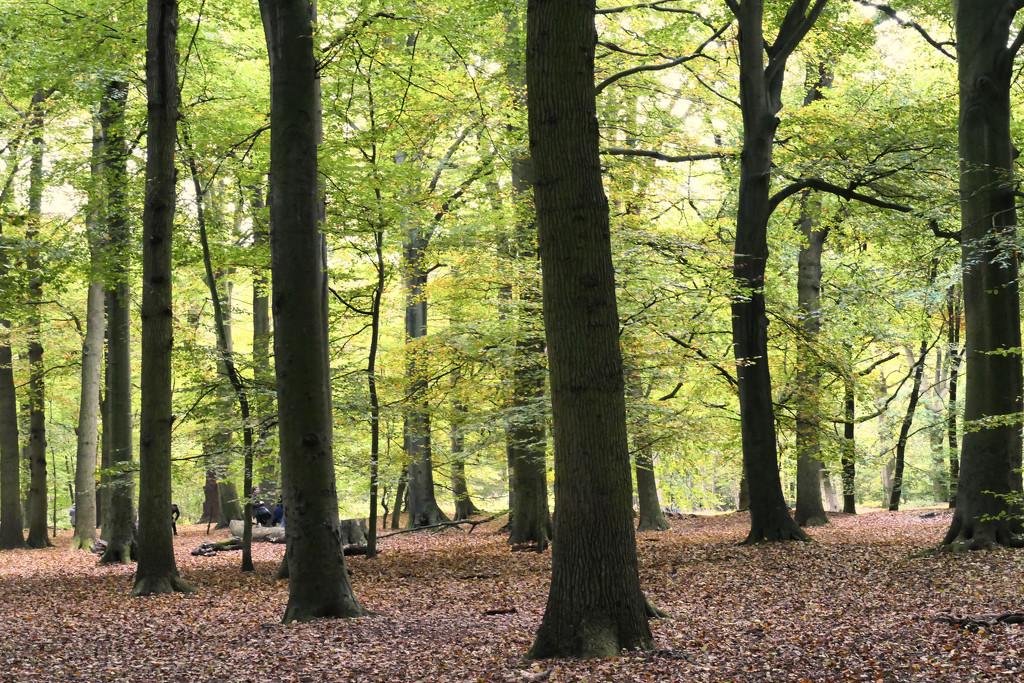 In the wood by marijbar
