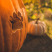 Paw Pumpkin