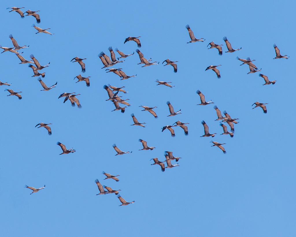 cranes by aecasey