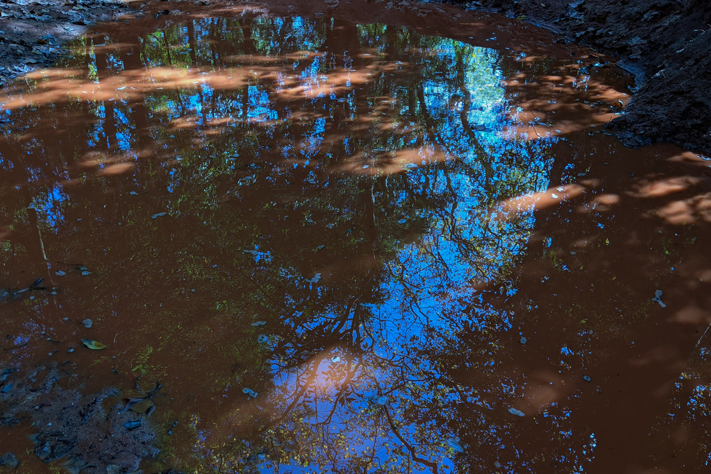 Reflection in a Rain Puddle by fotoblah