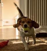 23rd Oct 2020 - The best Mutt Dog ever!