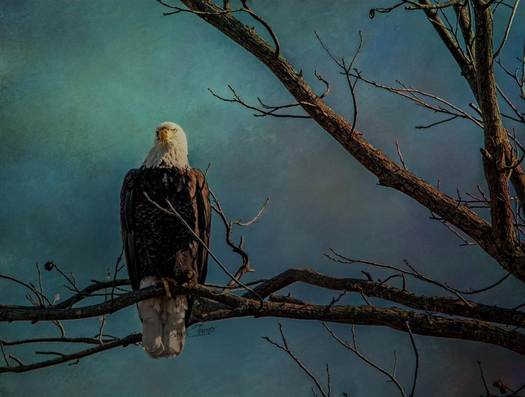 Symbol of strength and freedom  by samae