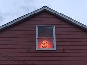 23rd Oct 2020 - Happy Harvest Pumpkin!