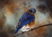 23rd Oct 2020 - Textured Bird
