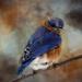 Textured Bird