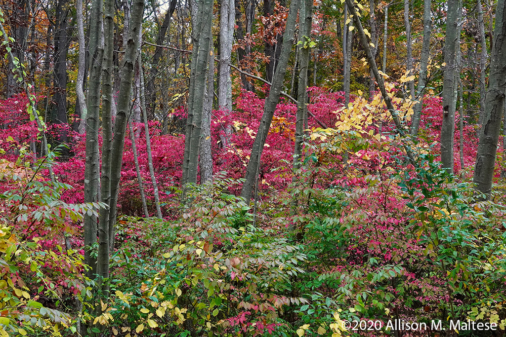Fall Color by falcon11