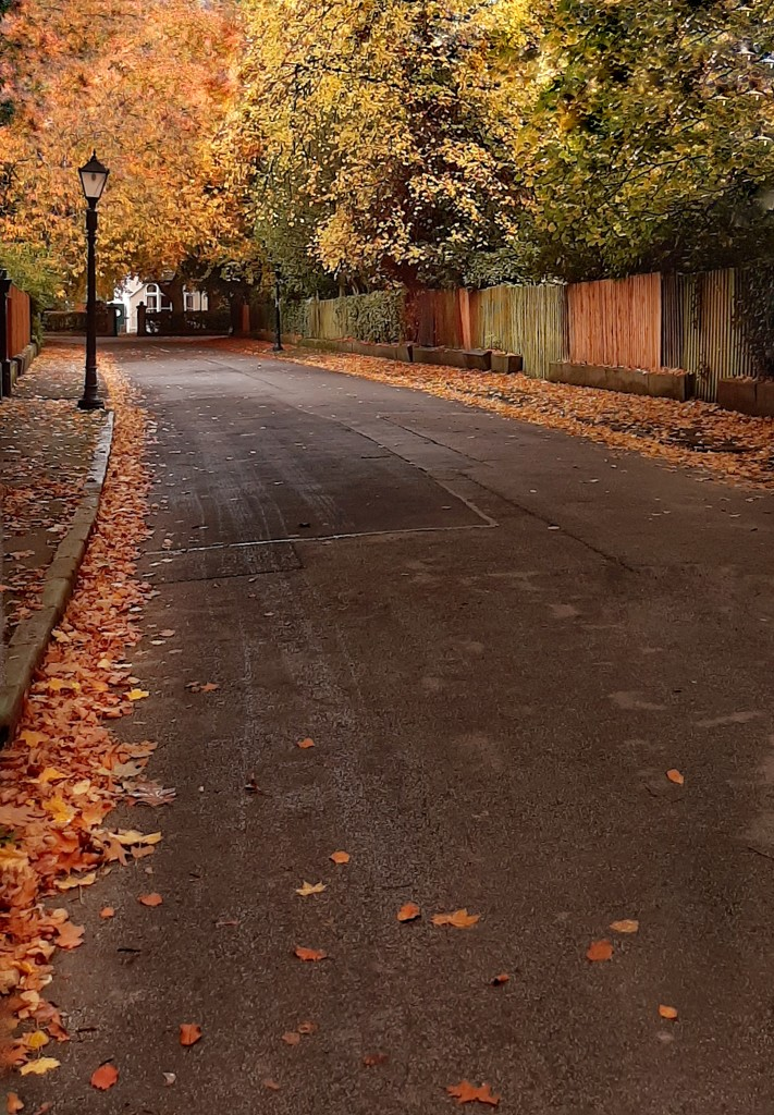 Leafy suburb by inthecloud5