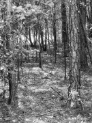 24th Oct 2020 - Between the pines and the fence line...