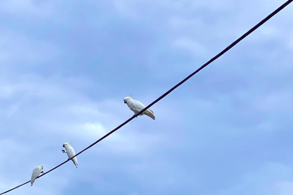 Birds by kjarn
