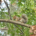 Squirrel with Nut In Its mouth