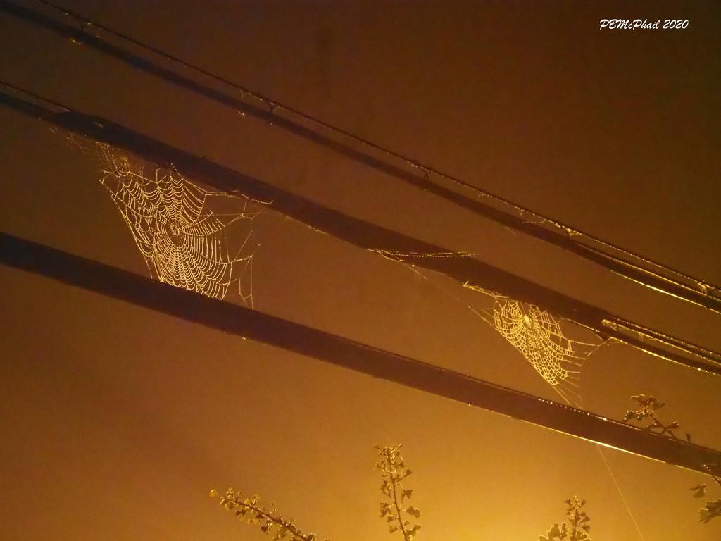 Webs in the Sky by selkie