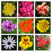 24th Oct 2020 - Flower Collage
