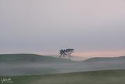 24th Oct 2020 - Misty morning