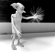 24th Oct 2020 - Make A Wish Dobby