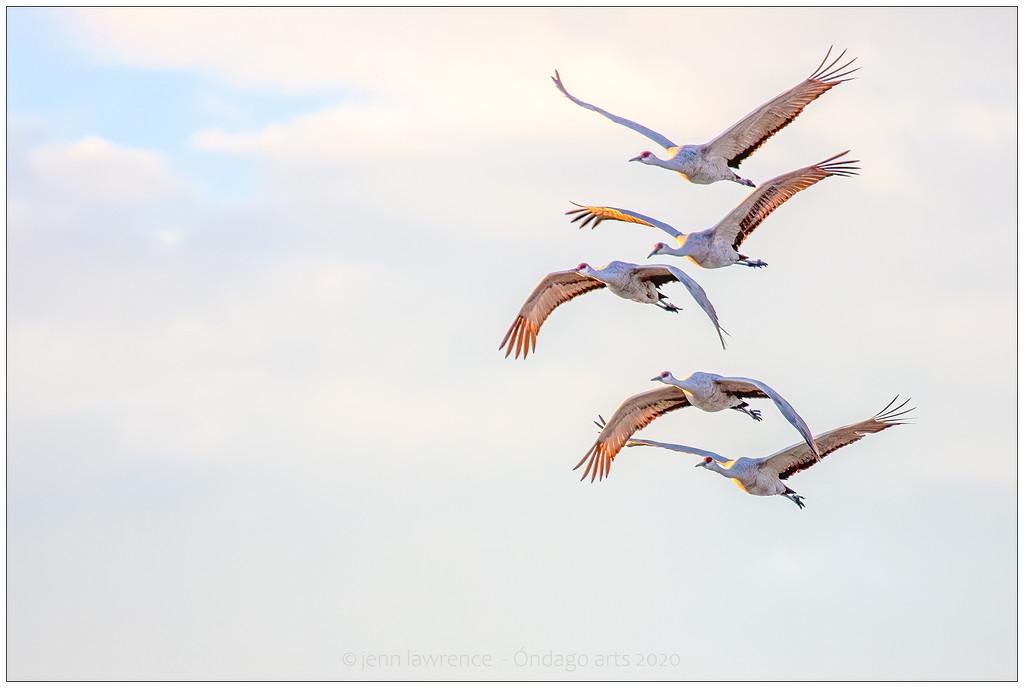 Taken Flight by aikiuser