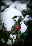 23rd Oct 2020 - Surprise! Snow!