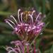 Fresh nectar