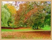 24th Oct 2020 - Autumn Palette