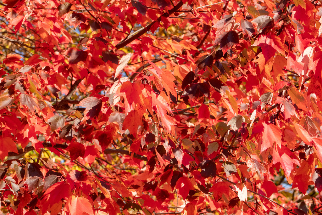 Leaves by tdaug80