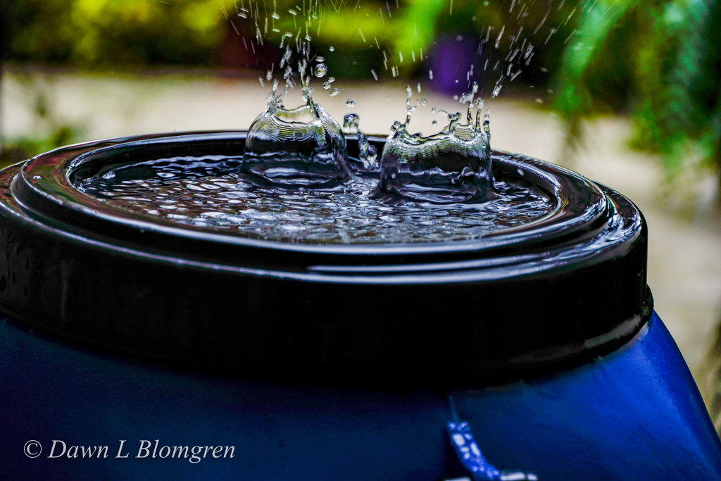 Double Drops by dawnblom