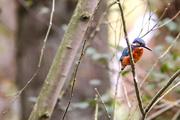 24th Oct 2020 - Kingfisher