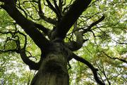 24th Oct 2020 - Old tree