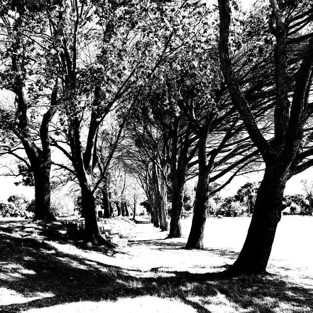 Trees of Keurboom #9 by eleanor