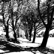 24th Oct 2020 - Trees of Keurboom #9